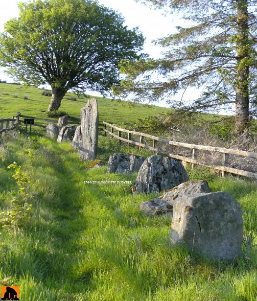 GOLES STONE ROW, COUNTY TYRONE